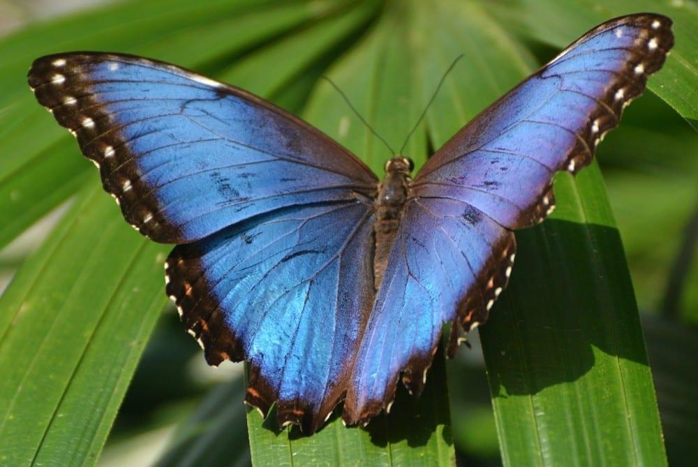 Mon histoire papillon violet by Mademoiselle M