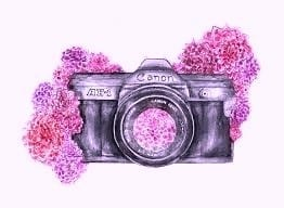 Webcam fleurs